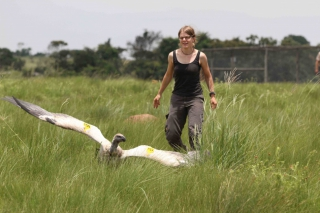 Cape Vulture release (photo by S. Hoffman)