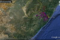 Movements of Oribi Cape vultures, January to April 2013